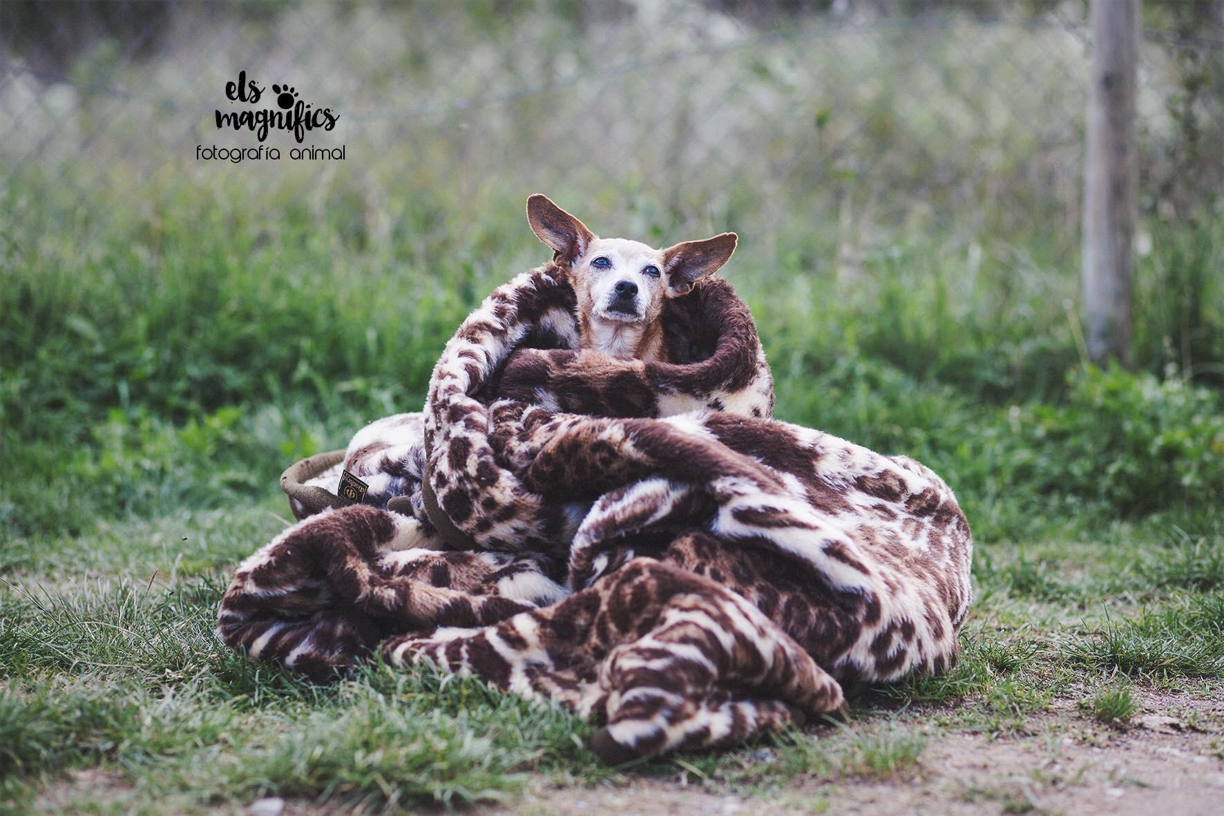 Terra Viva Associació Protectora d'Animals de La Garrotxa